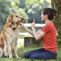 Education de mon chien