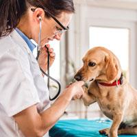 Santé de mon chien